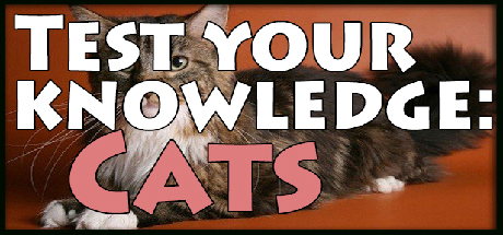 Test your knowledge: Cats